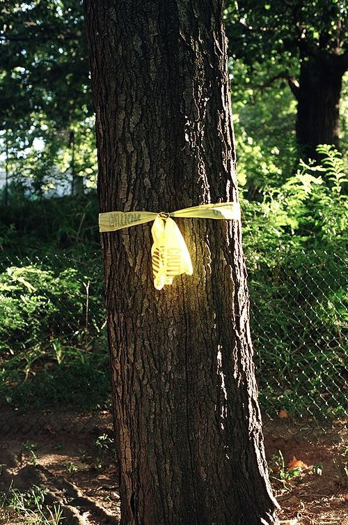 tree with yellow tape wrapped around it