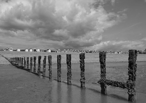 A black and white photo of a beach with barnacle-covered poles in the water