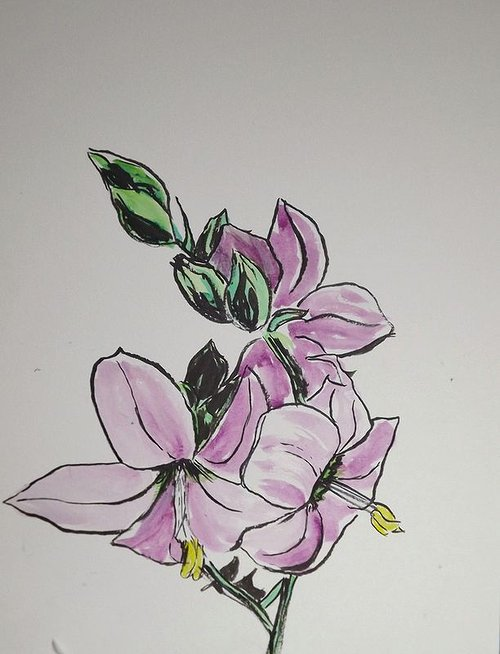 A simple watercolour of a wild flower