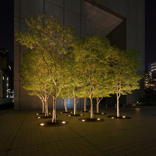 A photograph of a cluster of well-kempt trees in front of a skyscraper