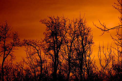 Artistic photo of trees at sunset