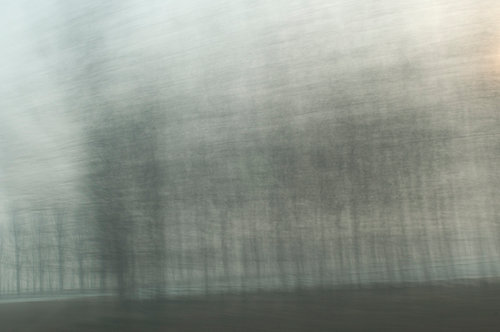 A blurred photograph of trees passing in the mist