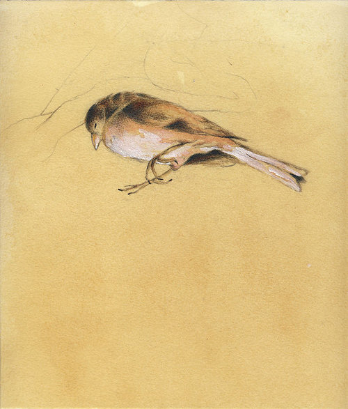 A chalk and conte drawing of a small dead bird