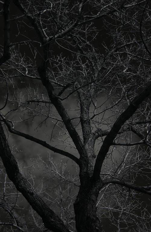 An infrared photograph of a tree in darkness