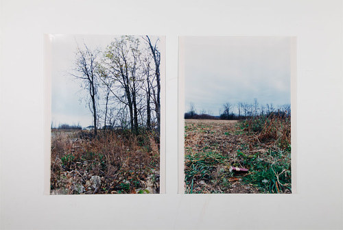 A photographic diptych of an overgrown empty lot
