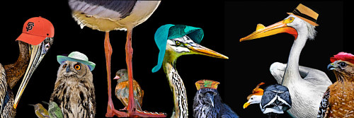 A manipulated photo of birds wearing different hipster outfits