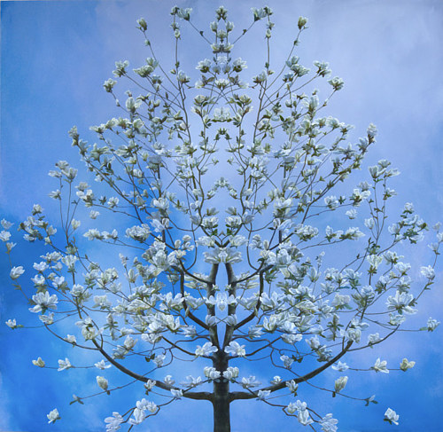 A mirrored painting of a sparse tree with white flowers