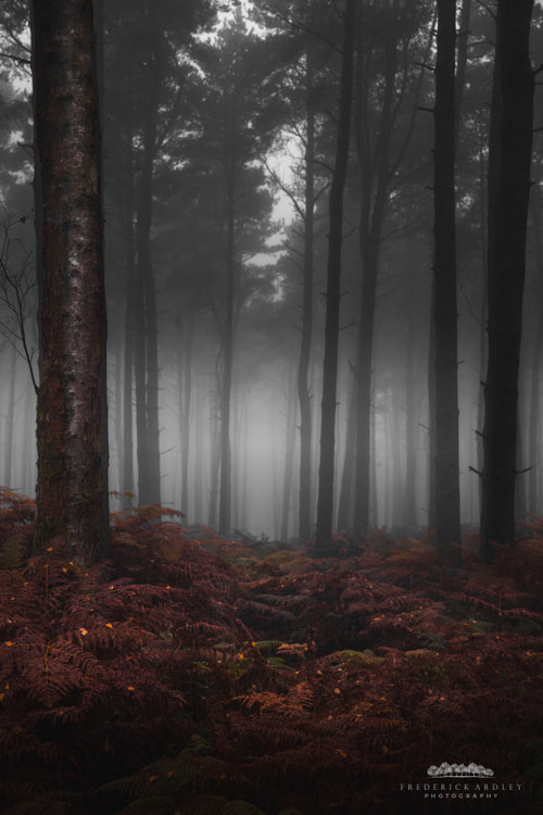 A photograph of an autumn forest by Frederick Ardley