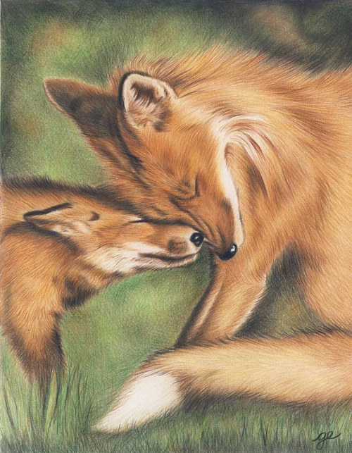A pencil crayon drawing of two foxes