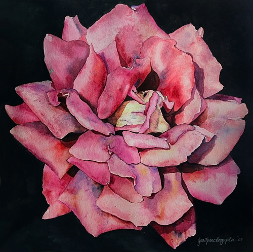 A watercolour painting of a pink rose
