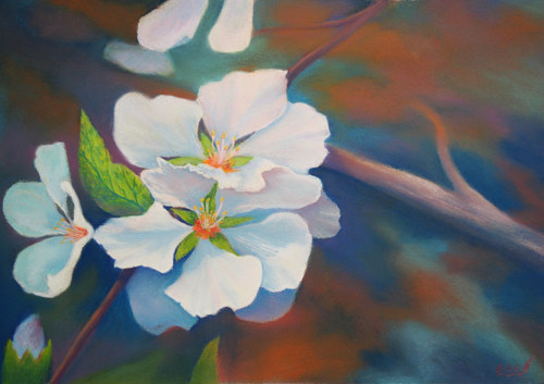 A pastel drawing of a pair of white apple blossoms