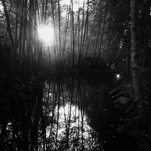 A photograph of the sun peeking through a dense thicket of trees