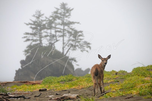 A photograph of a deer on a mountain trail
