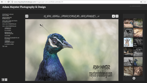 A screen capture of Adam Mayster's online photography gallery