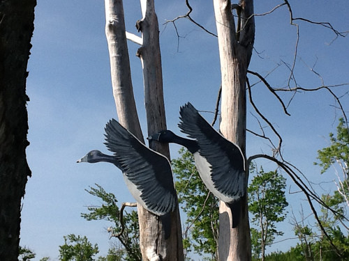 "A photograph of carved and painted birds in driftwood ""trees"""