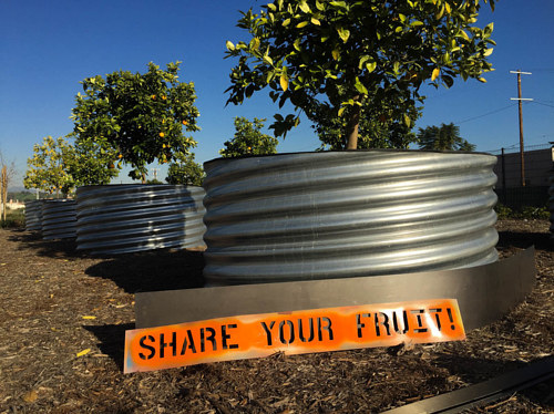 An image of fruit trees planted by Fallen Fruit in LA