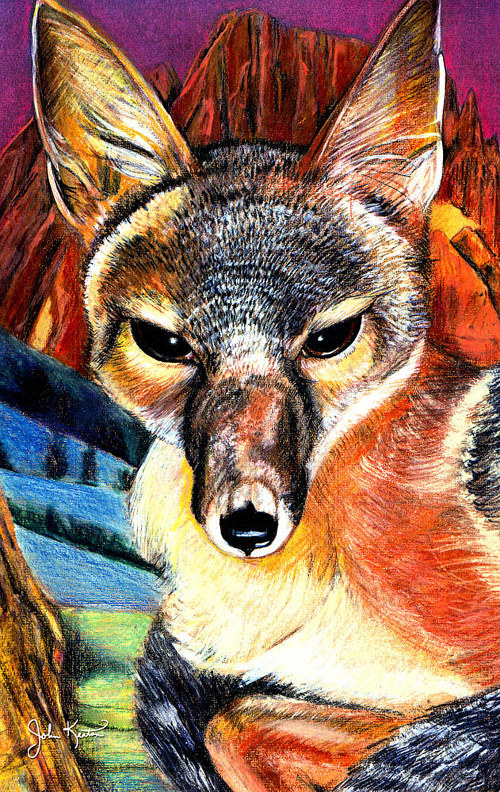 A detailed drawing of a kit fox