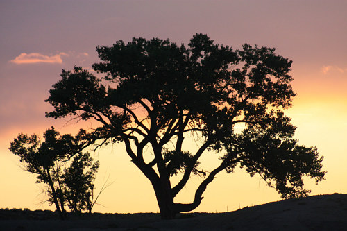 A photograph of a silhouetted tree at sunset
