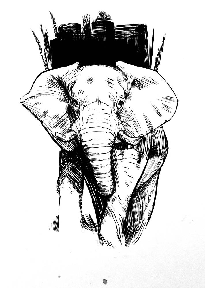 Drawing Olifant by Hendrik Gericke
