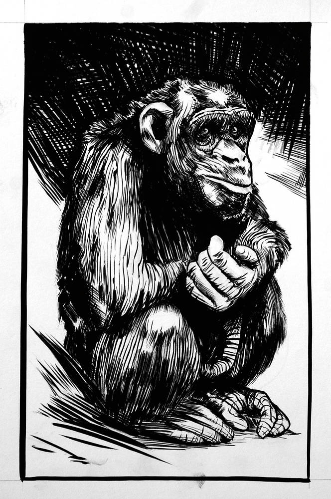 Drawing Chimpanzee by Hendrik Gericke