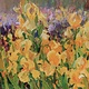Oil painting Yellow Iris by Susette Gertsch