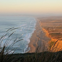 #SFO20 - Point Reyes Seashore #1 by Ivan Petrov