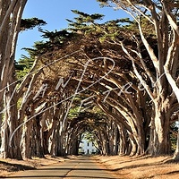 #SFO6 - Cypress Alley by Ivan Petrov