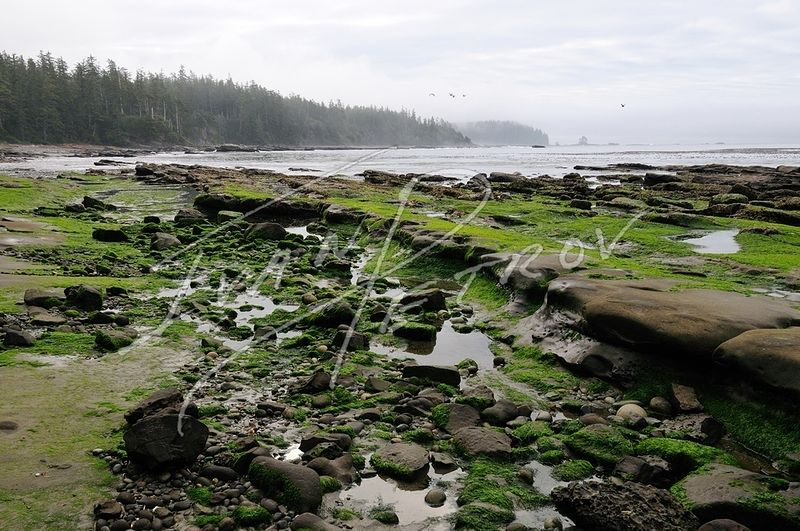 #YVR12 - West Coast Trail at Low Tide by Ivan Petrov