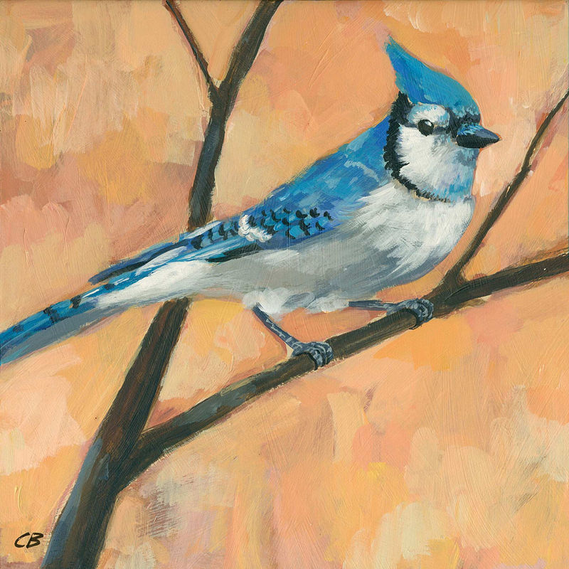 Print BLUEJAY C-082 by Cody Blomberg