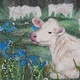 Charolais herd by Valerie Johnson