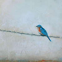 Acrylic painting Bluebird and Barbed Wire by Sally Adams