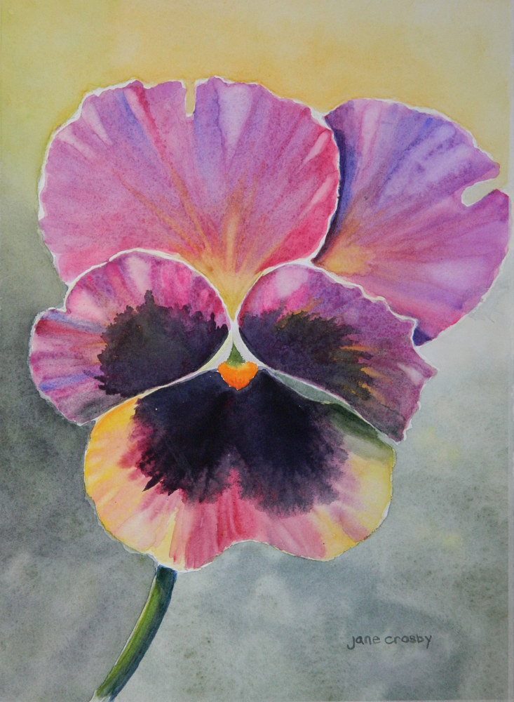 Watercolor Pansy by Jane Crosby