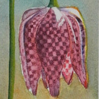 Watercolor Checkered Lilies by Jane Crosby