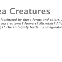 Sea Creatures series statement by Lori Sokoluk