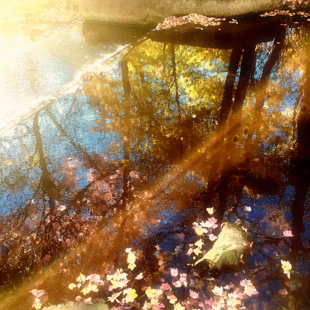 Sunshine Day Dreams by Dawn Reilly