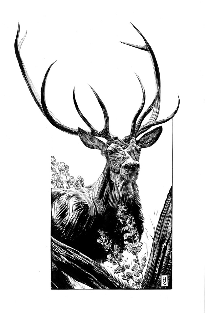 Drawing Stag by Hendrik Gericke
