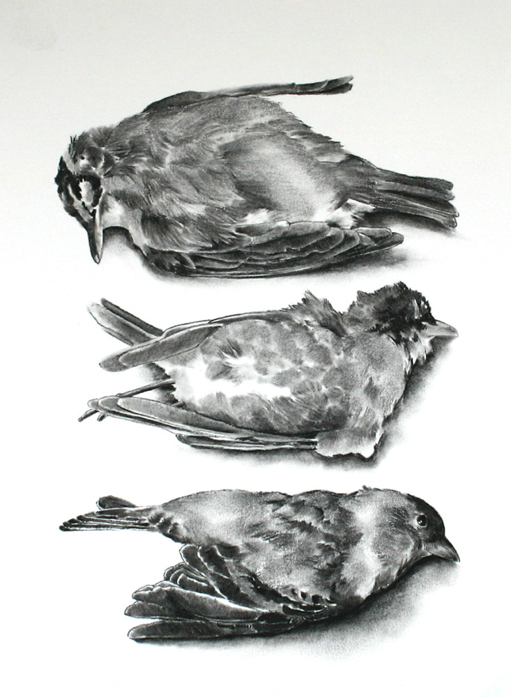 Drawing Three Birds by Ellen Cornett