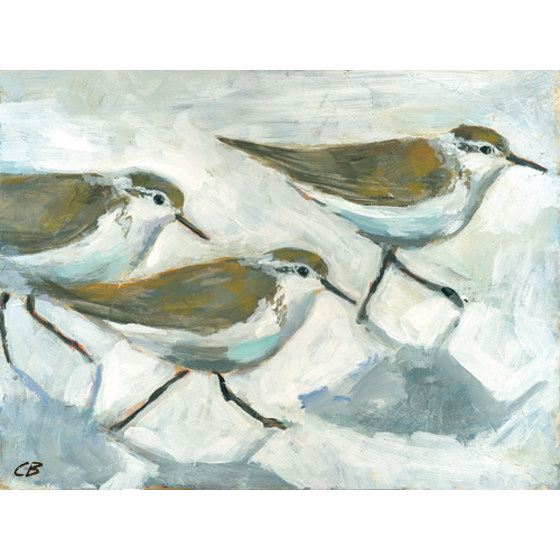 Print Sandpipers C-105 by Cody Blomberg