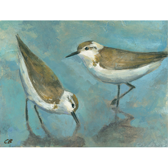 Print Sandpipers C-99 by Cody Blomberg