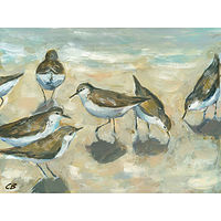 Print Sandpipers C-098 by Cody Blomberg