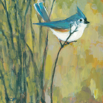 Print Tufted Titmouse C-116 by Cody Blomberg