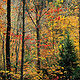 North Chagrin, Autumn by Wayne Mazorow