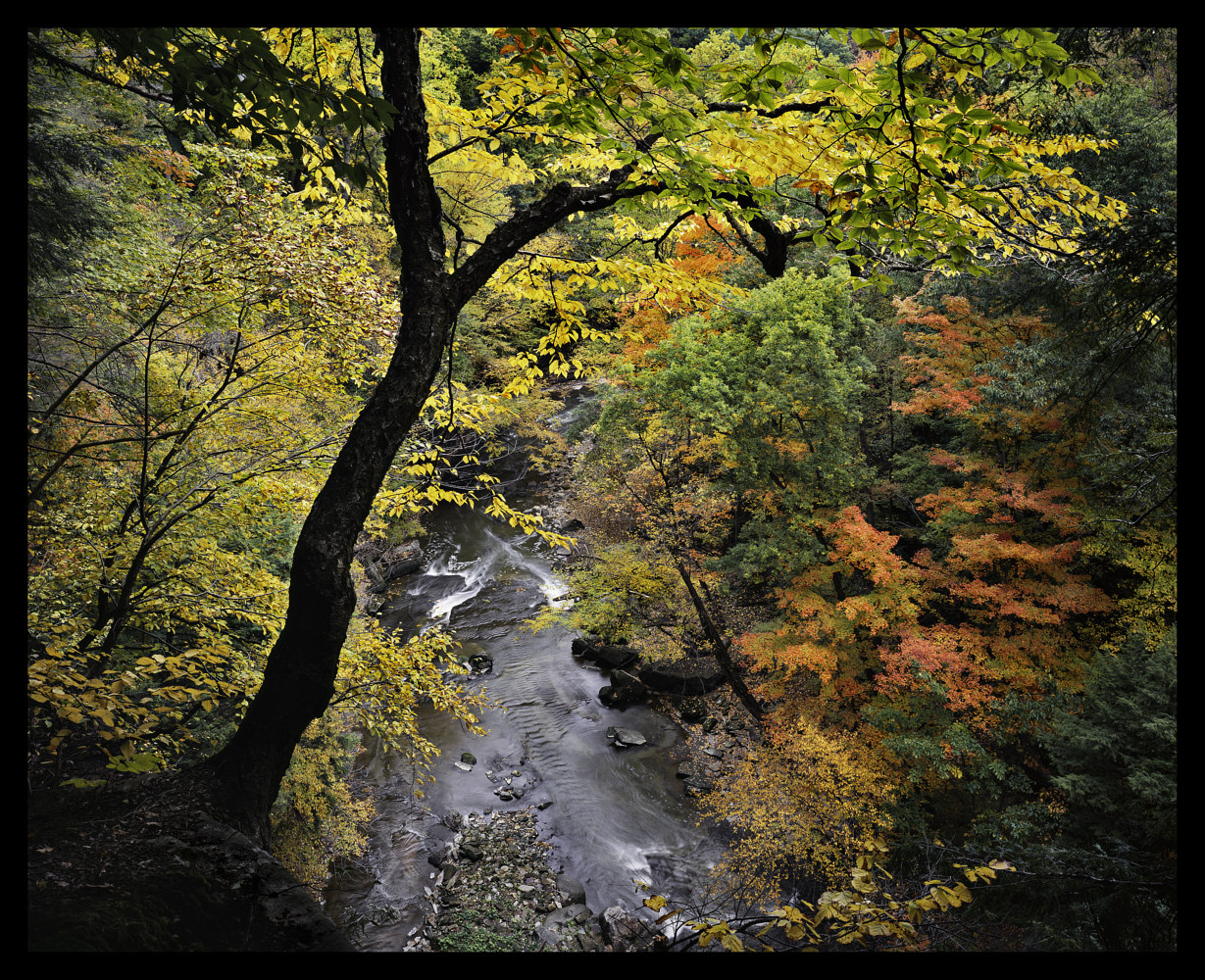 Tinkers Creek, Autumn Overlook by Wayne Mazorow