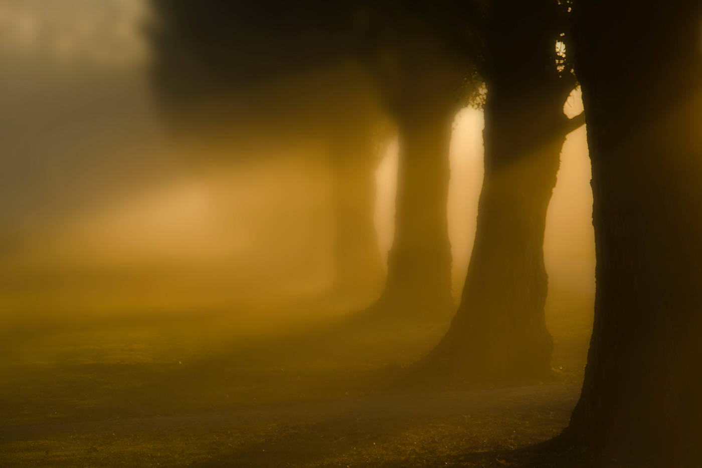 Trees & Light by Jim Friesen