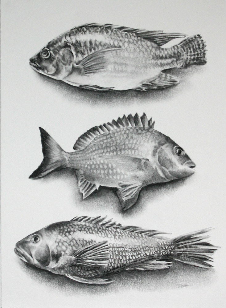 Drawing Three Fish by Ellen Cornett