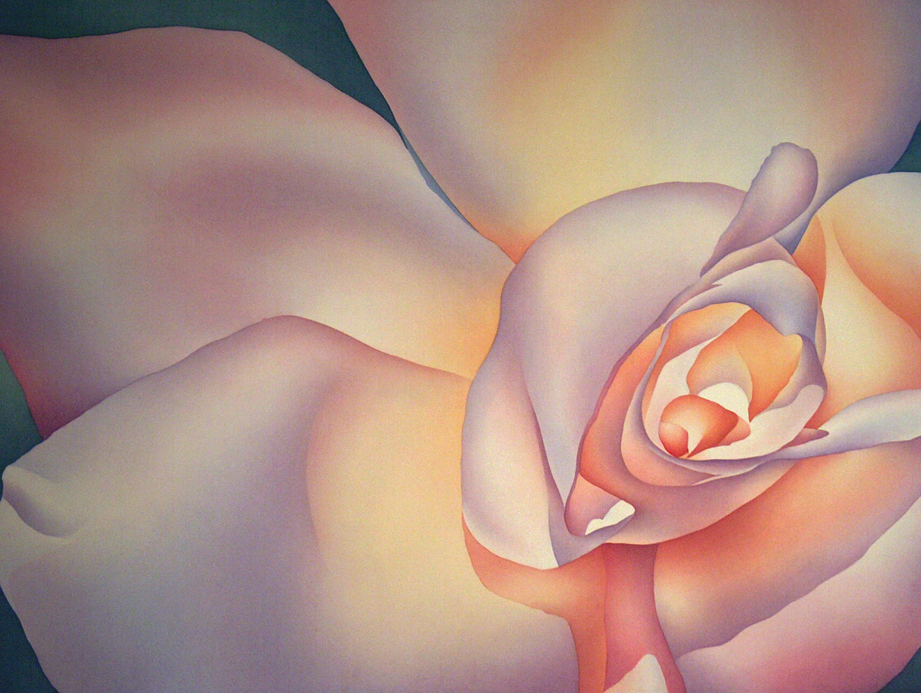 Watercolor Winged Rose by Anne Popperwell