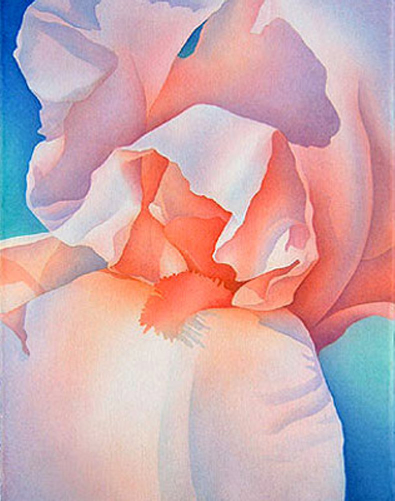 Watercolor Peach Iris  by Anne Popperwell