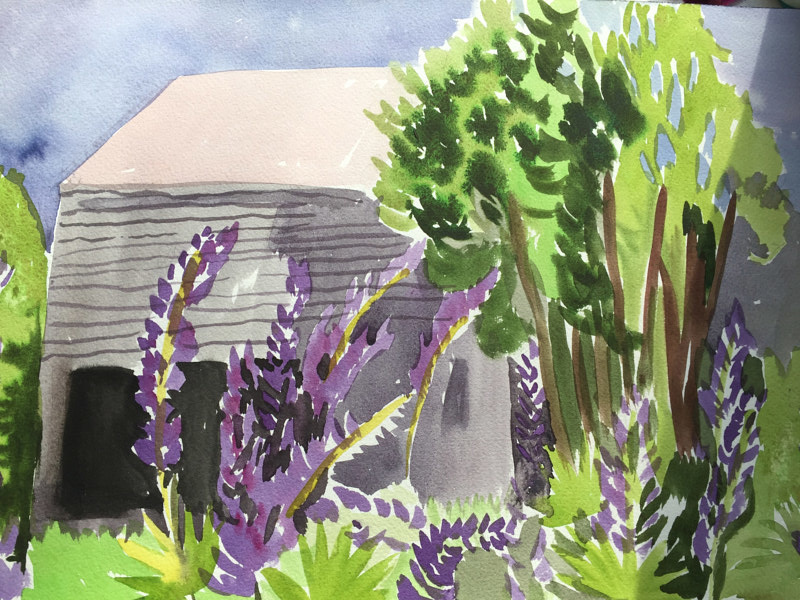 Watercolor Barn & Lupin by Michael Shyka