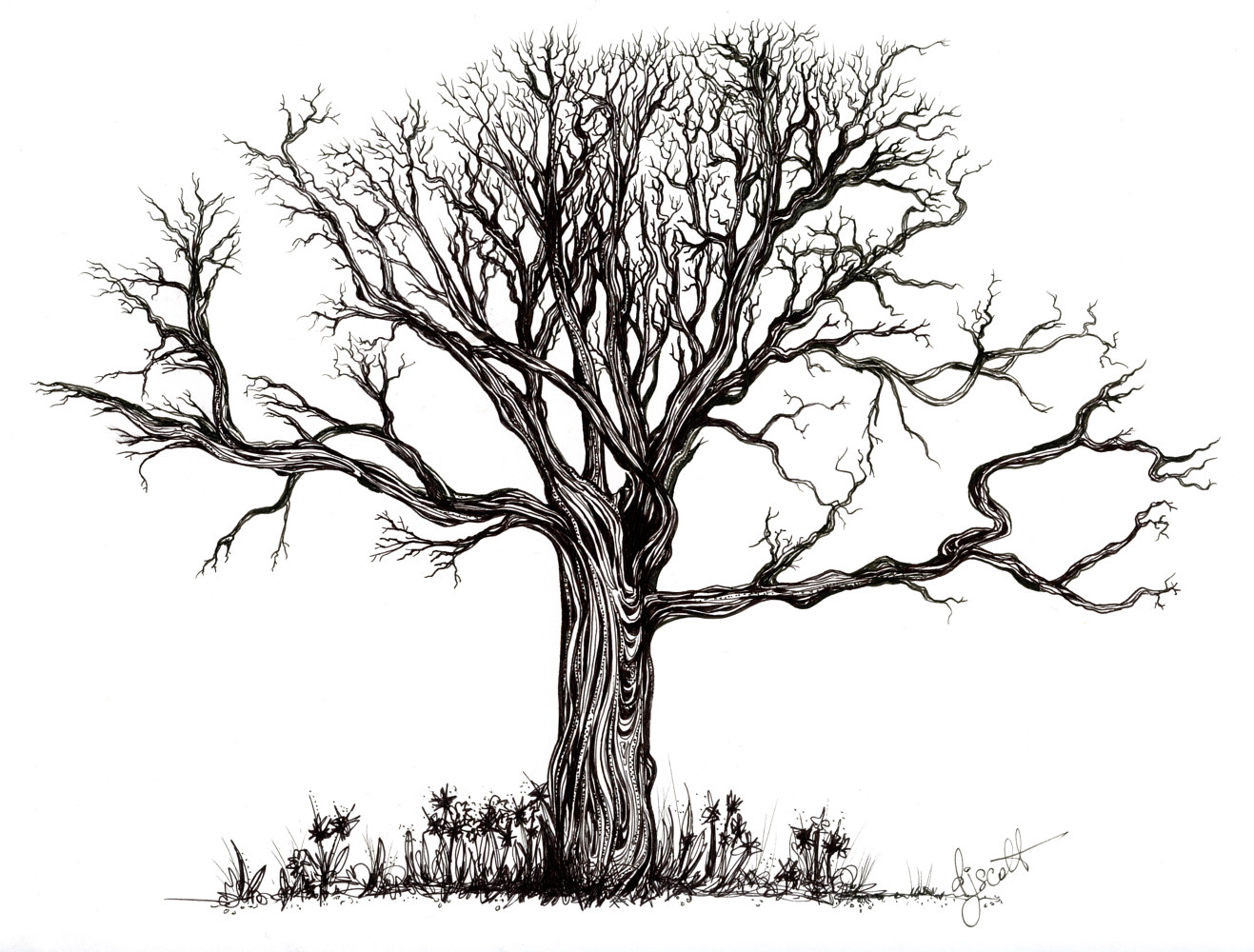 Drawing Uprooted by Danielle Scott