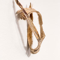 Photography Detail of Horse Hair Question 1 (in three parts)  by Tanya  Lukin-linklater